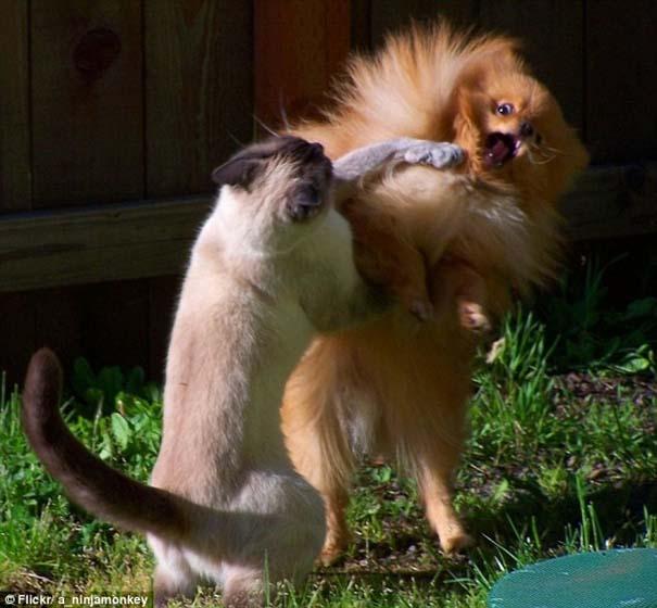 Γάτες που φωτογραφήθηκαν την κατάλληλη στιγμή (1)