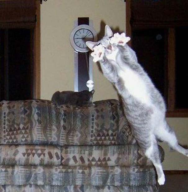 Γάτες που φωτογραφήθηκαν την κατάλληλη στιγμή (5)