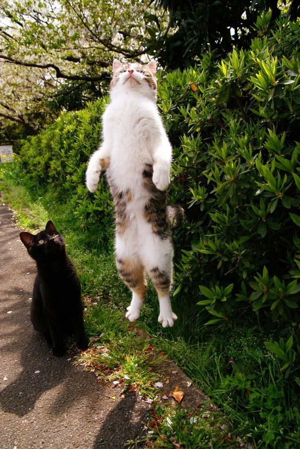 Γάτες που φωτογραφήθηκαν την κατάλληλη στιγμή (7)