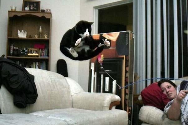 Γάτες που φωτογραφήθηκαν την κατάλληλη στιγμή (10)