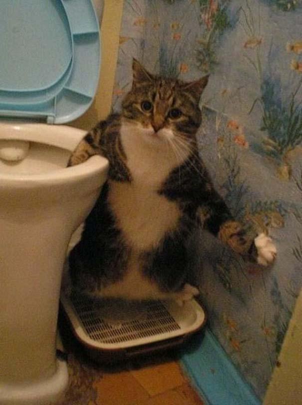 Γάτες που φωτογραφήθηκαν την κατάλληλη στιγμή (11)