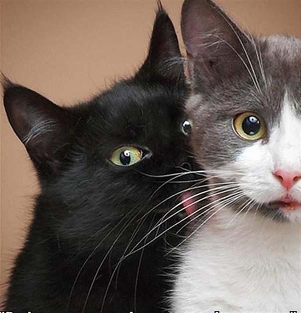 Γάτες που φωτογραφήθηκαν την κατάλληλη στιγμή (12)