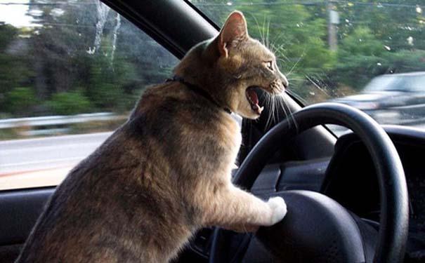 Γάτες που φωτογραφήθηκαν την κατάλληλη στιγμή (15)
