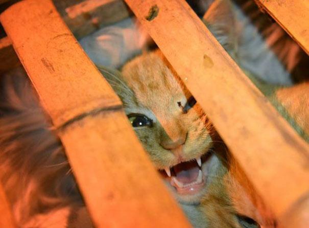 1000 γάτες σώθηκαν χάρη σε ένα τροχαίο... (1)