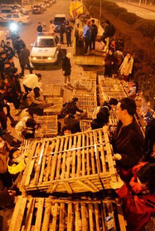 1000 γάτες σώθηκαν χάρη σε ένα τροχαίο... (4)