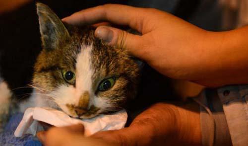 1000 γάτες σώθηκαν χάρη σε ένα τροχαίο... (5)