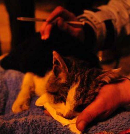 1000 γάτες σώθηκαν χάρη σε ένα τροχαίο... (7)