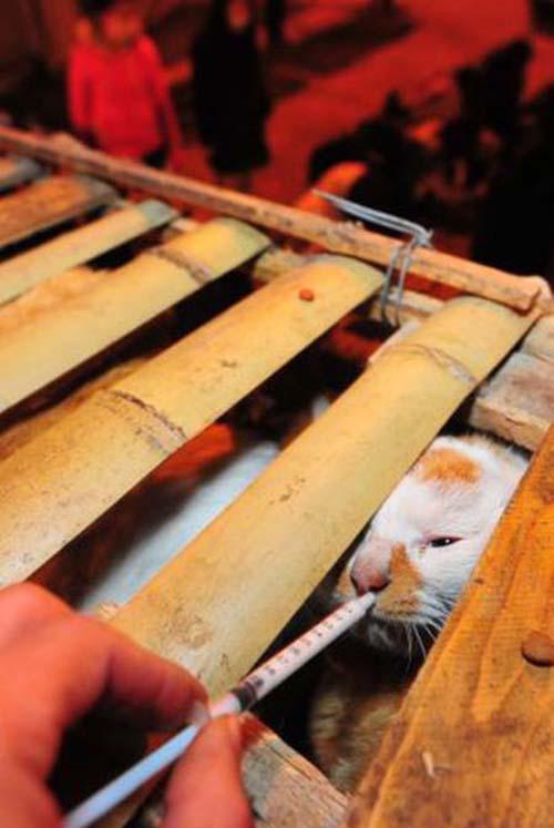 1000 γάτες σώθηκαν χάρη σε ένα τροχαίο... (8)
