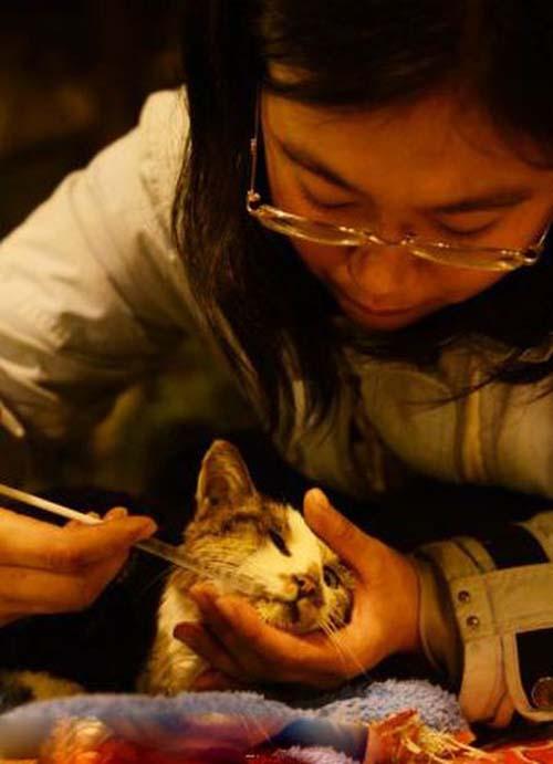 1000 γάτες σώθηκαν χάρη σε ένα τροχαίο... (9)