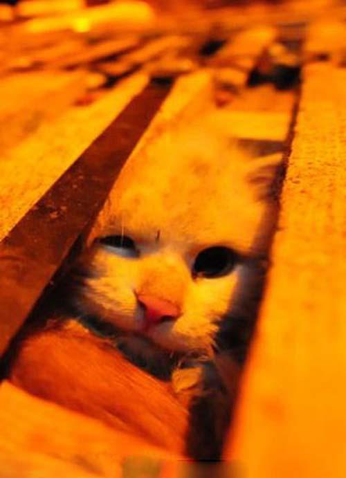 1000 γάτες σώθηκαν χάρη σε ένα τροχαίο... (11)