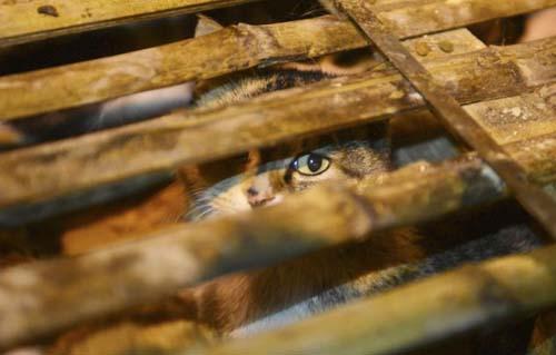 1000 γάτες σώθηκαν χάρη σε ένα τροχαίο... (16)