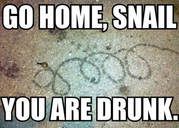 Go Home, You're Drunk (8)