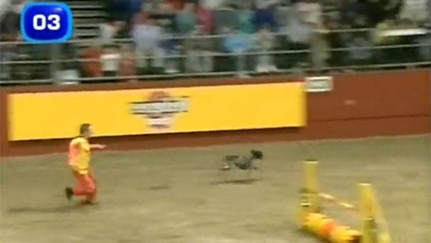 Ίσως ο πιο γρήγορος σκύλος στον κόσμο