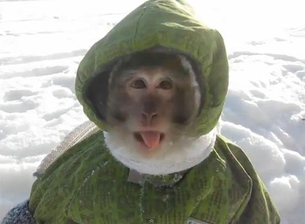Μαϊμού με στολή για τα χιόνια