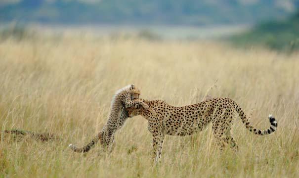 National Geographic: Οι κορυφαίες φωτογραφίες του 2012 (6)