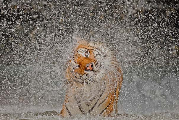 National Geographic: Οι κορυφαίες φωτογραφίες του 2012 (10)