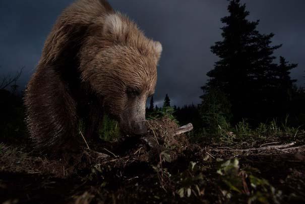 National Geographic: Οι κορυφαίες φωτογραφίες του 2012 (12)