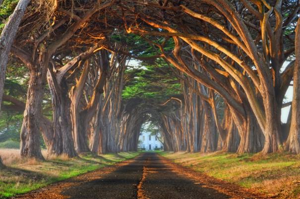 Τούνελ από δέντρα   Φωτογραφία της ημέρας