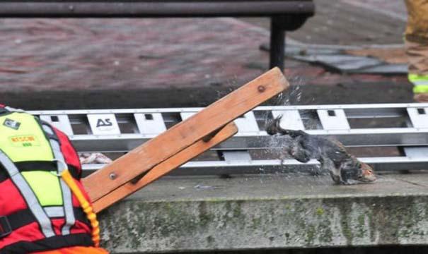 Πόσοι πυροσβέστες χρειάζονται για να σώσουν έναν σκίουρο; (5)