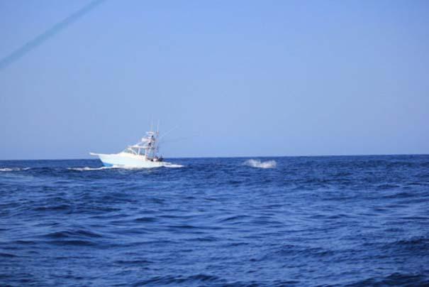 Ψάρι εναντίον σκάφους: Ποιο θα υπερισχύσει; (1)