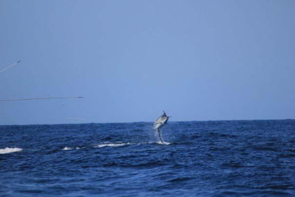 Ψάρι εναντίον σκάφους: Ποιο θα υπερισχύσει; (2)