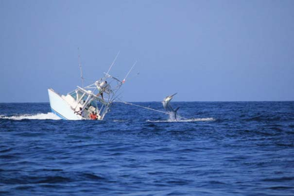 Ψάρι εναντίον σκάφους: Ποιο θα υπερισχύσει; (3)