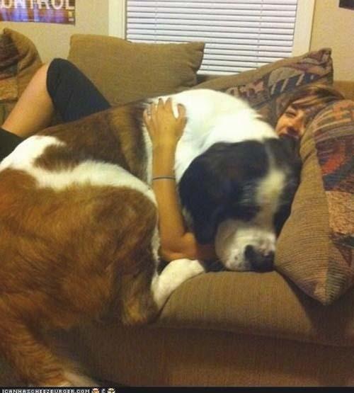 Σκύλοι που δεν συνειδητοποιούν πόσο τεράστιοι είναι (16)