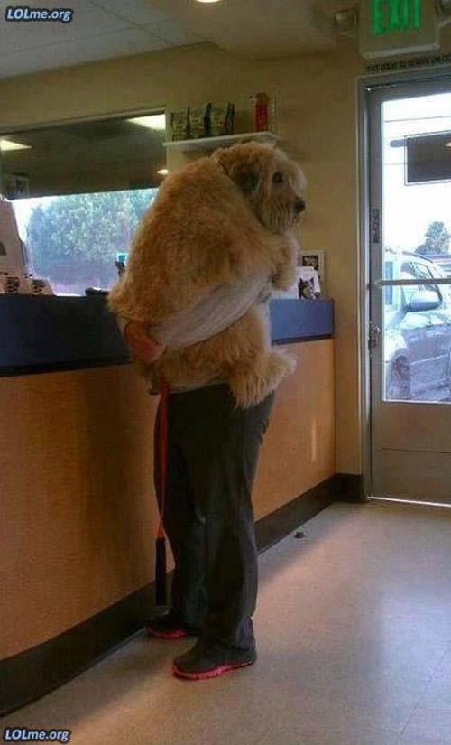 Σκύλοι που δεν συνειδητοποιούν πόσο τεράστιοι είναι (17)