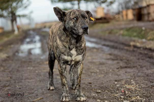 Αυτός ο σκύλος δεν θες να βρεθεί στον δρόμο σου (2)