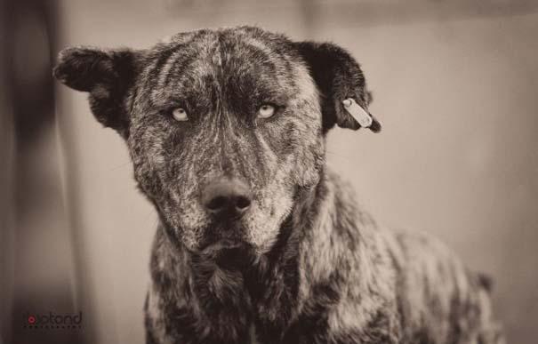 Αυτός ο σκύλος δεν θες να βρεθεί στον δρόμο σου (3)