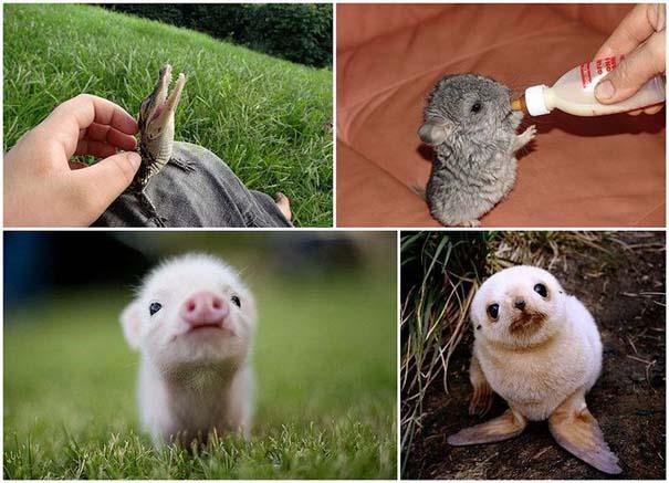 Τα πιο χαριτωμένα μωρά ζώων (1)