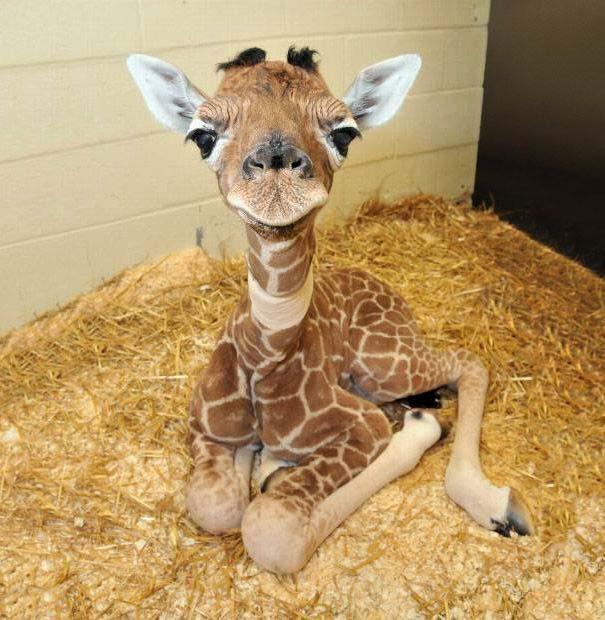 Τα πιο χαριτωμένα μωρά ζώων (3)