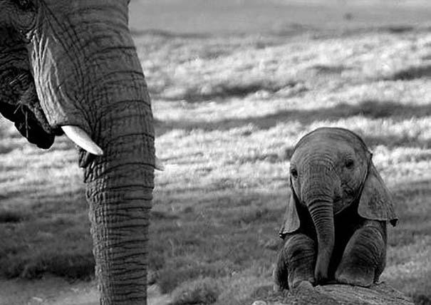 Τα πιο χαριτωμένα μωρά ζώων (4)