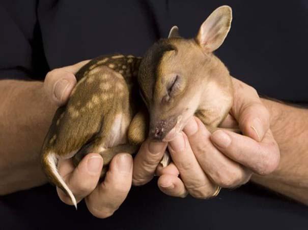Τα πιο χαριτωμένα μωρά ζώων (7)