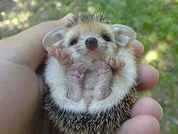 Τα πιο χαριτωμένα μωρά ζώων (9)