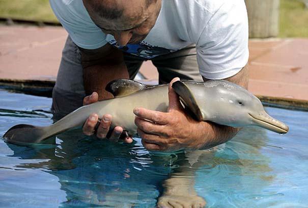 Τα πιο χαριτωμένα μωρά ζώων (11)