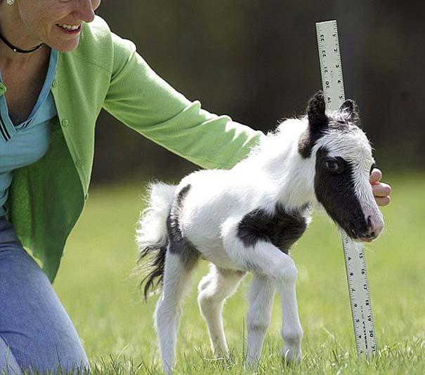 Τα πιο χαριτωμένα μωρά ζώων (23)