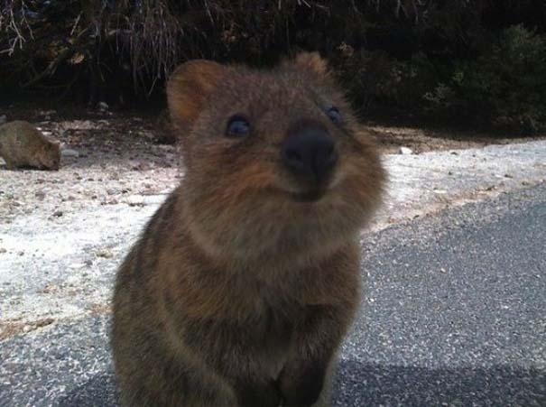 Το πιο ευτυχισμένο ζώο στον κόσμο (7)