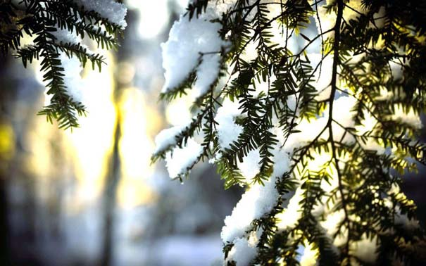 Ο Χειμώνας σε 35 υπέροχες φωτογραφίες (23)