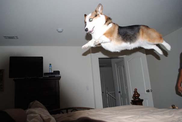 Ζώα που αψηφούν την βαρύτητα (3)
