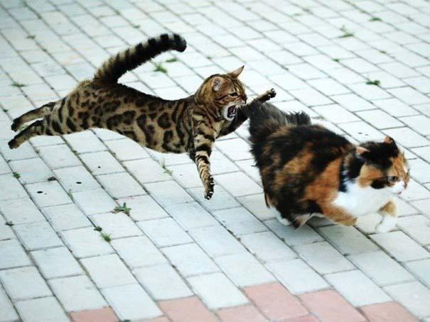 Ζώα που αψηφούν την βαρύτητα (5)