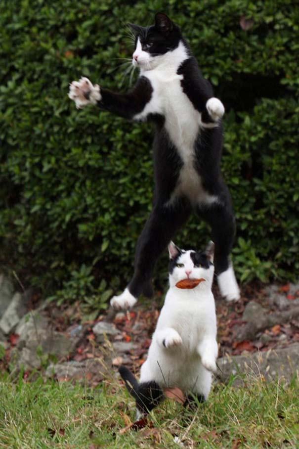 Ζώα που αψηφούν την βαρύτητα (8)