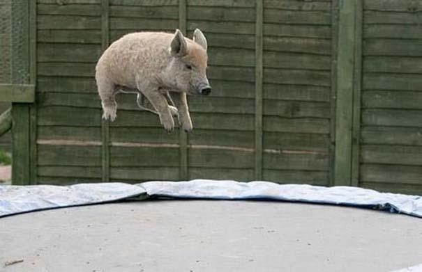 Ζώα που αψηφούν την βαρύτητα (13)