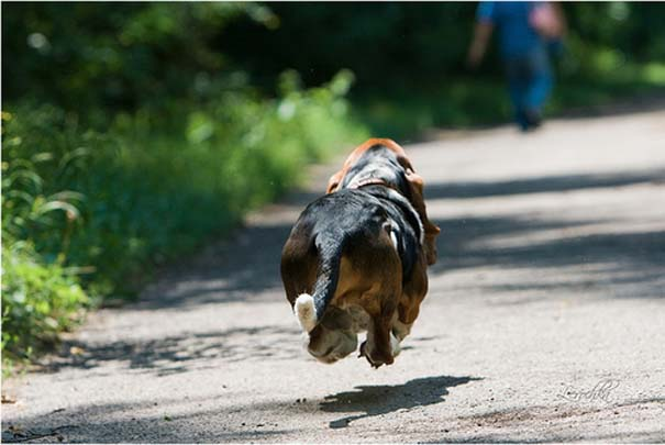 Ζώα που αψηφούν την βαρύτητα (16)