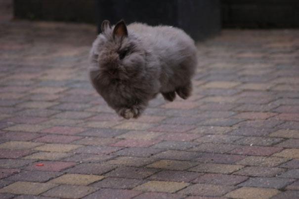 Ζώα που αψηφούν την βαρύτητα (19)