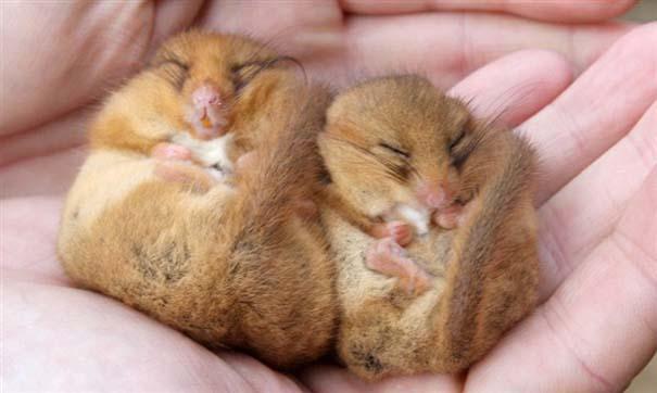Ζώα που κοιμούνται περίεργα (4)