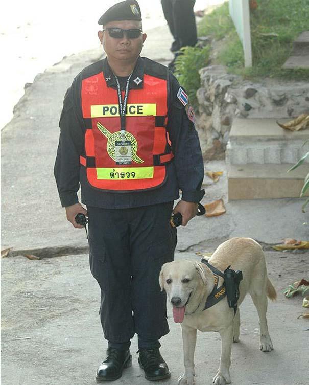 Αστυνομικός σκύλος στην Ταϊλάνδη (2)
