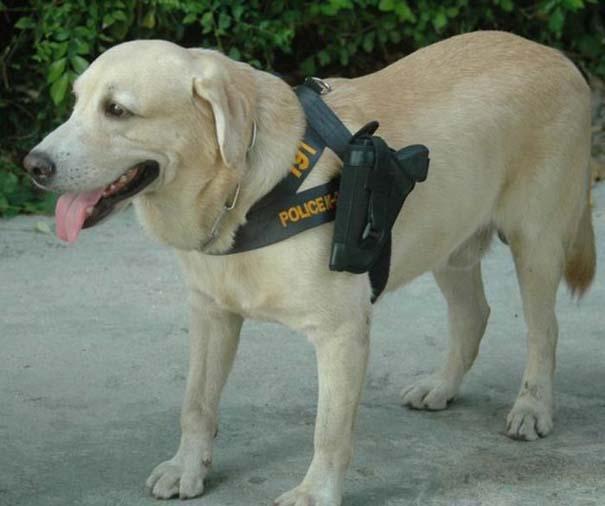 Αστυνομικός σκύλος στην Ταϊλάνδη (4)