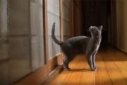 Η γάτα που χτυπάει την πόρτα... σαν πολυβόλο