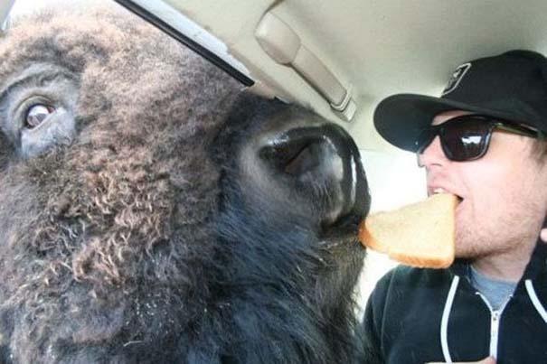 Οι 45 πιο περίεργες φωτογραφίες ανθρώπων που ποζάρουν με ζώα (29)